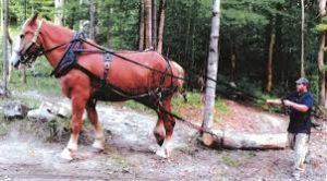 horse logging3
